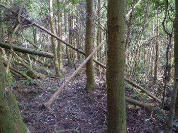 P1360514植林谷を横切る.JPG