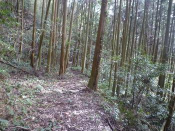 P1360516植林谷沿い.JPG
