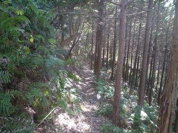 P1360600ヒノキ植林.JPG