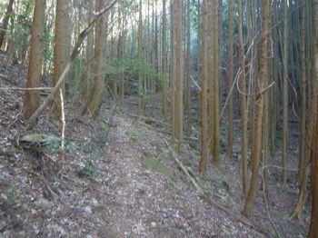 P1360605植林沿い.JPG
