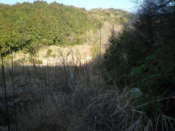 P1360639耕作放棄地を横切る.JPG
