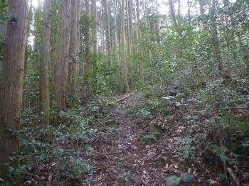 P1360669植林沿い.JPG
