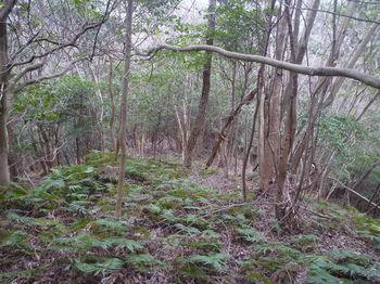 P1360728雑木疎林尾根.JPG