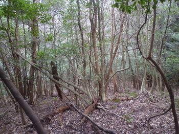 P1360729雑木疎林平坦尾根.JPG