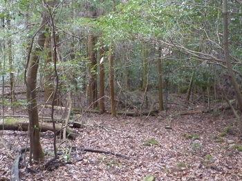 P1360730植林出合い.JPG