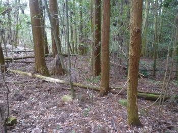 P1360731植林沿い.JPG