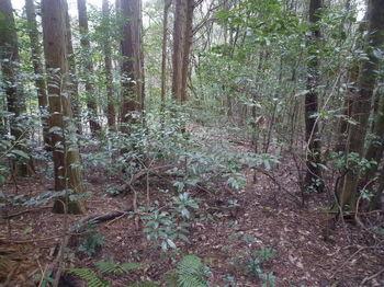 P1360735植林沿い.JPG