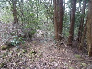P1360737右に植林.JPG