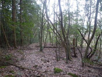 P1360739左に植林.JPG
