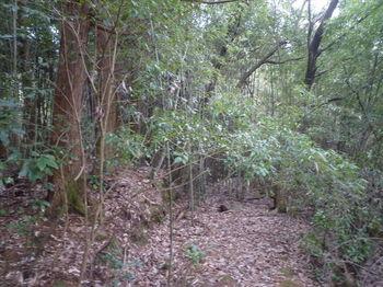 P1360742ヒノキ林沿い.JPG