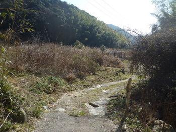 P1360783集落道終点部・巡視路分岐・標柱.JPG