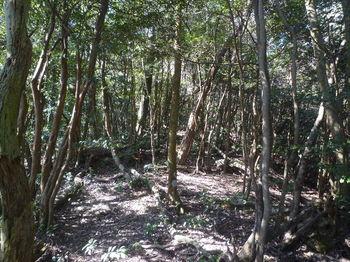 P1360833雑木疎林.JPG