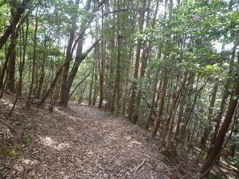 P1360891植林沿い.JPG