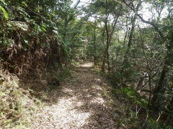P1360896登山道.JPG