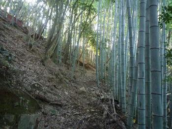 P1360922竹林沿い.JPG