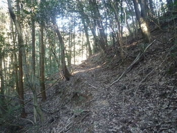 P1360926山道.JPG
