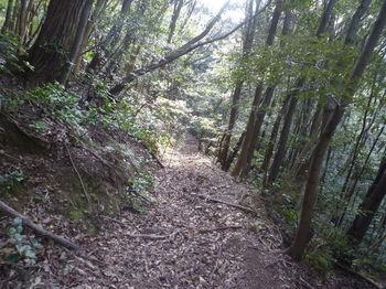 P1370121山道.JPG