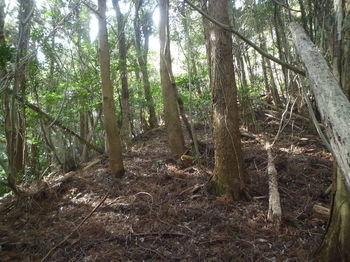 P1370140植林沿い.JPG