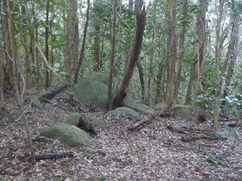 P1370172小岩.JPG