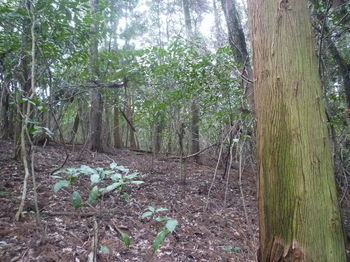 P1370176植林境・支尾根を横切る.JPG