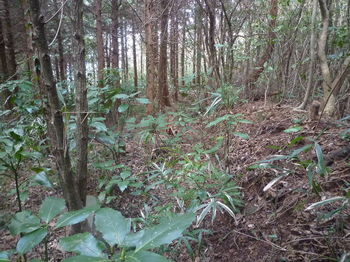 P1370181植林境・土塁.JPG
