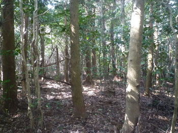 P1370183スギ植林の支尾根を横切る.JPG