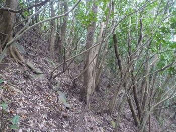 P1370204山頂北側のヤブ斜面.JPG