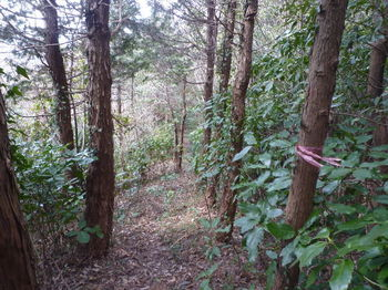 P1370205植林境尾根沿いの山道.JPG