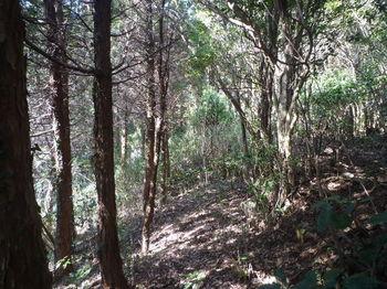 P1370208植林境・山道.JPG