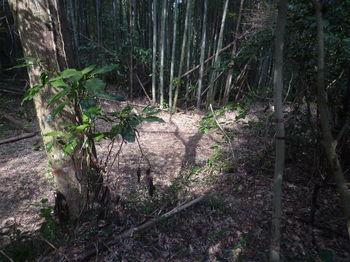 P1370224林道出合い・みのが峠.JPG