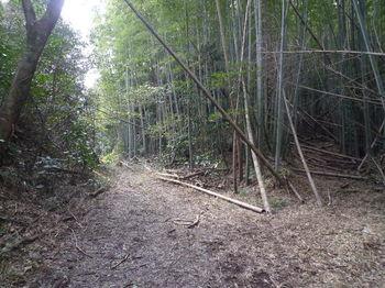 P1370225林道(南方向)・竹林取り付き.JPG