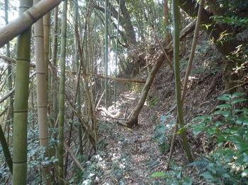 P1370335山道.JPG