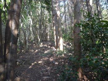 P1370344植林境.JPG