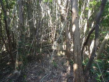 P1370345植林終わる.JPG