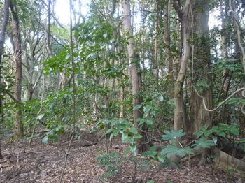 P1370368不明瞭な植林境尾根.JPG