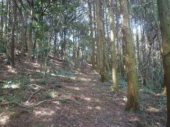 P1370401植林境の山道.JPG