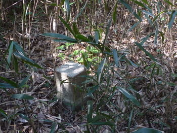 P1370408ササヤブの中の三角点「寺岡」.JPG