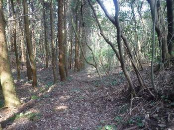 P1370418植林沿いの山道.JPG