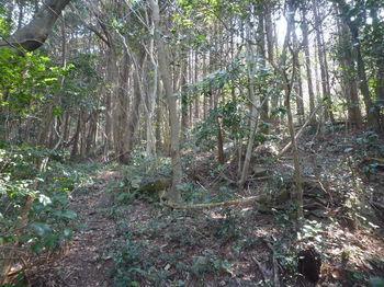 P1370531植林帯.JPG