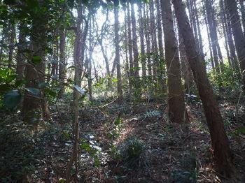 P1370538植林斜面を登る(谷?).JPG