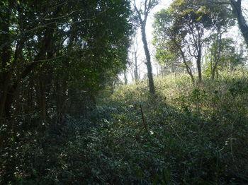 P1370541雑木境のササ尾根.JPG