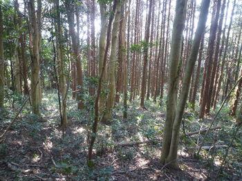 P1370550植林帯.JPG