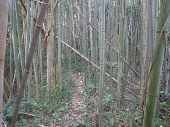 P1370586竹林沿い.JPG