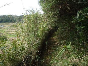 P1370645耕作地・ササ沿い.JPG