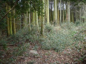 P1370662分岐(直進・ややササ道)・植林沿い.JPG