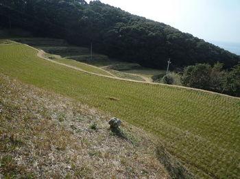 P1370738耕作地斜面の塔.JPG
