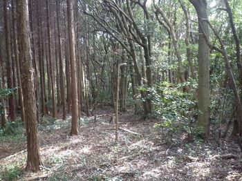 P1370748植林境.JPG