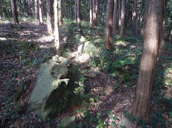 P1370753植林帯野中の石積み.JPG