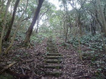 P1370794丸木階段.JPG