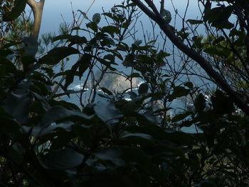 P1370825樹間に山島.JPG